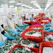 Xuất khẩu tôm dự kiến đạt 3,1 tỷ USD năm 2016