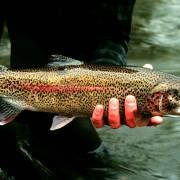 Cá hồi và rau an toàn Sa Pa được trao thương hiệu sản phẩm độc quyền