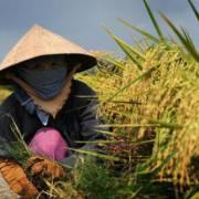 Chính phủ đặt mục tiêu nâng gấp đôi thu nhập của người nông dân