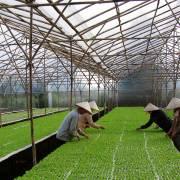 Chuyện Ecofarm và chủ trương lớn 'tích tụ ruộng đất'