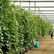 Bình Dương đầu tư gần 1.000 tỷ đồng phát triển nông nghiệp công nghệ cao
