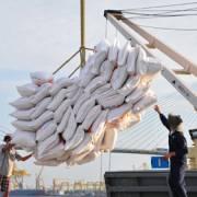 Kiến nghị Quốc hội bãi bỏ điều kiện xuất khẩu gạo
