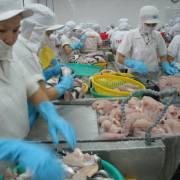 Thương nhân Trung Quốc vét thuỷ sản ta đến 'đáy nồi'