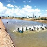 Tổng cục Thủy sản khuyến cáo thả giống tôm theo thời vụ