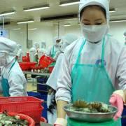 Cà Mau tiếp tục dẫn đầu kim ngạch xuất khẩu tôm