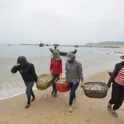 Vụ Formosa: Tiếp tục ngưng đánh bắt tầng đáy từ 20km trở vào bờ biển miền Trung