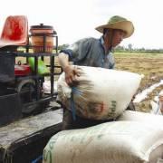 Sửa Nghị định 109: 'Ngành gạo cần học ngành cá tra'