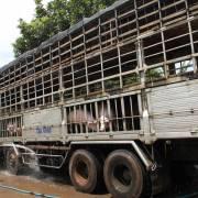 Trung Quốc đồng ý nhập chính ngạch thịt lợn từ Việt Nam