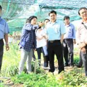 Khi người Nhật trồng rau ở Việt Nam