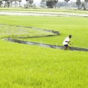 Tích tụ ruộng đất đừng quên quyền tài sản của nông dân