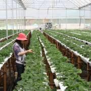Các ngân hàng đã đăng ký hơn 100.000 tỷ đồng cho vay nông nghiệp