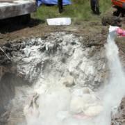 Hậu Giang: Tiêu hủy hơn 900 con gà bị nhiễm cúm H5N1