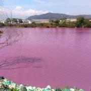 Nước hồ điều tiết lũ ở Bà Rịa – Vũng Tàu đổi màu tím
