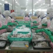 EU kiểm tra doanh nghiệp xuất khẩu tôm Việt Nam