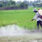 Mỗi năm vẫn có cả trăm ngàn tấn thuốc bảo vệ thực vật đổ xuống ruộng đồng