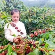 Nước ngoài hưởng lợi từ cà phê Việt