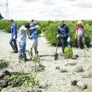 Năm 2016, TPHCM trồng được gần 1 triệu cây xanh