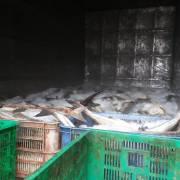 Đã tìm ra nguyên nhân khiến cá chết hàng loạt trên sông Chà Và?