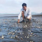 Chưa xác định được nguyên nhân hải sản chết hàng loạt ở Kiên Giang