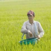 Nhập khẩu phân bón, thuốc trừ sâu từ Trung Quốc tăng mạnh