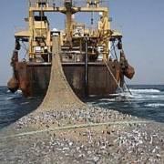 Đại dương không còn cá