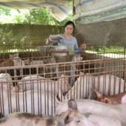 Giá thịt heo dần hồi phục, tiêu thụ hơn 200.000 tấn