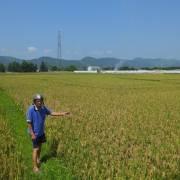 Hàng nghìn hộ dân Hà Tĩnh có nguy cơ thiếu gạo