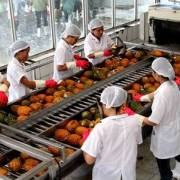 Xuất khẩu rau, quả trong 5 tháng đầu năm đạt gần 1,4 tỷ USD