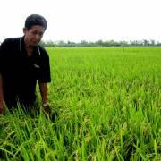 Mạng lưới đối tác giúp Việt Nam sản xuất lúa gạo bền vững