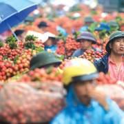 Việt Nam thật ra chưa có sự đầu tư tìm hiểu thị trường Trung Quốc…
