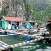 Cân nhắc kỹ việc cho người nước ngoài thuê mặt nước biển nuôi trồng thủy sản