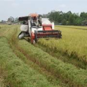 Xuất khẩu gạo sẽ sôi động những tháng cuối năm