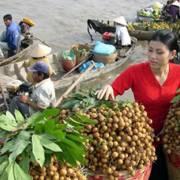 Tại sao nông sản Việt 'rớt từ vòng gửi xe' khi tìm đường xuất khẩu?