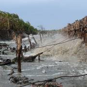 Nỗi lo sạt lở trong mùa mưa bão ở Cà Mau