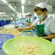 Xuất khẩu hạt điều dự kiến đạt 3,3 tỷ USD