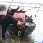 Lũ sớm, nước sông Cửu Long đang lên