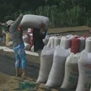 VCCI đề nghị tiếp tục giảm quy định về xuất khẩu gạo