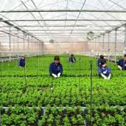 Đã có gần 28.000 tỷ đồng cho vay nông nghiệp công nghệ cao