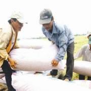 Không có chuyện nguồn cung gạo thế giới bị thắt chặt