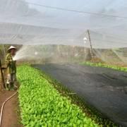 Sở Nông nghiệp sẽ là nơi cấp chứng nhận hữu cơ