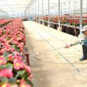 Đề xuất lập ngân hàng đất đai để phát triển nông nghiệp