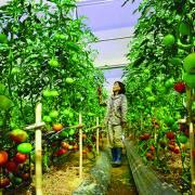 Đầu tư nông nghiệp: một dự án 'gánh' 40 thủ tục