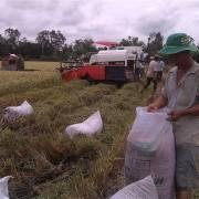 Xuất khẩu gạo dự báo tiếp tục tăng ở nhiều thị trường