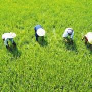 Bình luận: giảm tổn thương cho ĐBSCL bằng phục hồi môi trường tự nhiên
