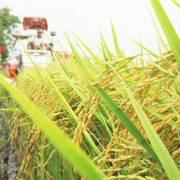 Trình Chính phủ sửa nghị định xuất khẩu gạo