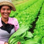 Campuchia: bớt trồng lúa cho bớt nghèo