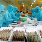 Gỡ thẻ vàng cho thủy sản Việt Nam: bài học từ Philippines và Thái Lan