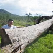 Vấn đề: 'Chúng ta giỏi quá! Chuyển hết rừng giàu thành… rừng nghèo'