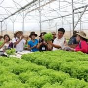 Bộ Nông nghiệp đề xuất chính sách phát triển hợp tác, liên kết nông nghiệp