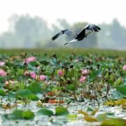 Để du lịch ĐBSCL không chỉ là 'đờn ca tài tử và sông nước…'
